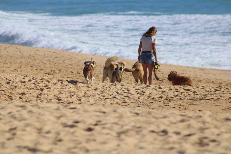 Wskazówki i porady dotyczące opieki nad psem